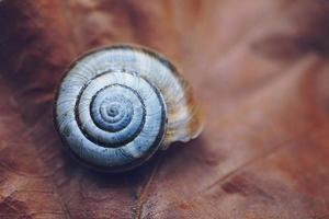 White snail in nature