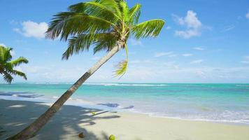 Palm tree on the Dominican Republic beach