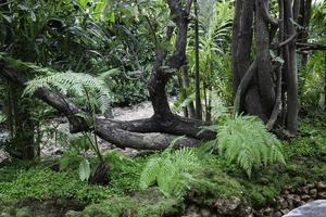 plantas verdes en el jardín tropical foto