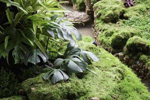 plantas verdes en un jardín tropical foto