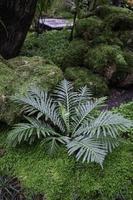 Green plants in tropical garden photo