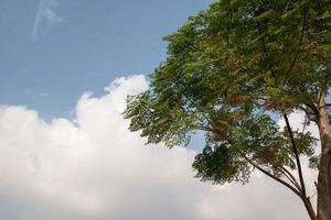 Green tree, white clouds, blue sky