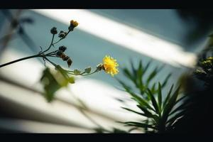 Shadow of a yellow flower