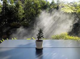 Table of free space with green plant photo