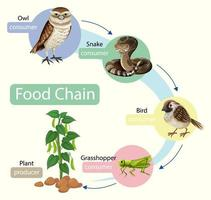 concepto de diagrama de cadena alimentaria vector
