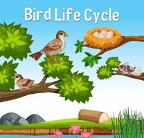 Scene with Bird Life Cycle vector