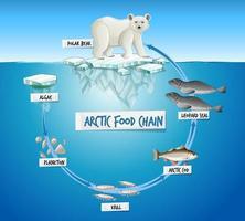 Arctic Food Chain Diagram Concept vector