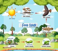 Food chain diagram concept on forest background vector