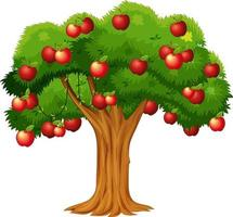 Apple tree isolated on white background vector