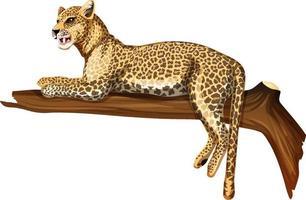 leopardo, acostado, en, un, rama, blanco, plano de fondo vector