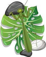 Vista superior de una mantis en hojas de monstera aislado vector