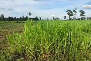 Green grass field during daytime photo