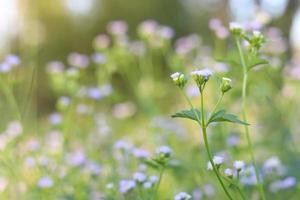 Cluster of light purple flowers photo