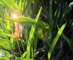 Exotic flower, bird of paradise, strelitzia or crane flower