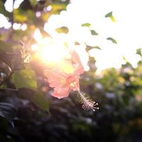 Hibiscus flower jungle with sunlight at sunset