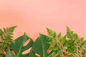hojas de monstera y helecho sobre fondo rosa