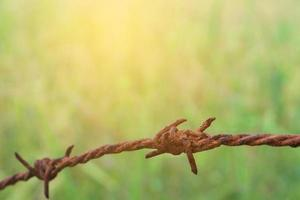 Barbed wire fencing with nature background