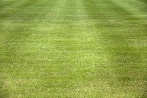 primer plano del campo de hierba foto
