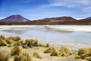 Laguna Hedionda en Bolivia