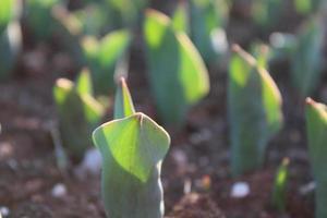 Macro cerca de brotes de plantas verdes y plántulas en el suelo