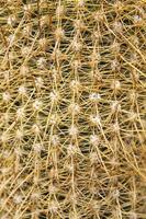 Closeup of the cactus photo