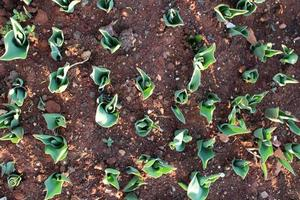 Macro close up of green plant sprouts and seedlings in soil