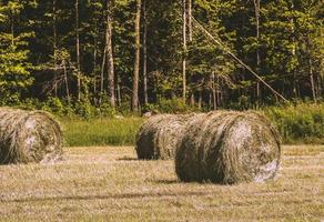 Bales of hay in a field next to a green forest