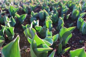 brotes de plantas y plantas jóvenes con detalles macro