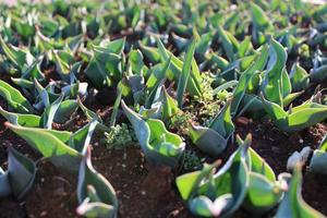 Plant sprouts and young plants with macro details