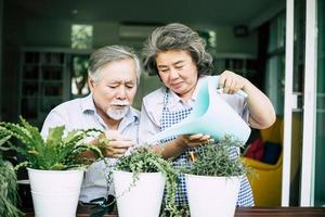 Elderly couple talking together and planting trees in pots
