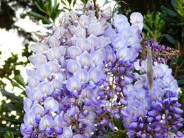 Flores azules y arbustos en un jardín. foto