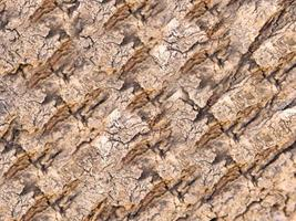 Close-up of tree bark for background or texture photo