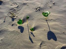 Small green plants in sand