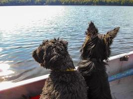 Two dogs in a boat overlooking a lake with a forest in the background