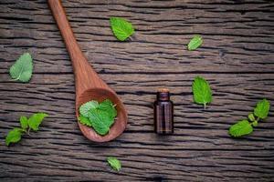 Lemon balm essential oil photo