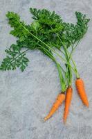 Fresh carrot bunch