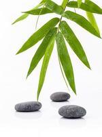 bambú y piedras en blanco foto