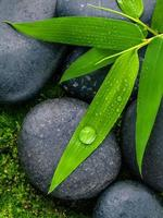 Green bamboo and stones