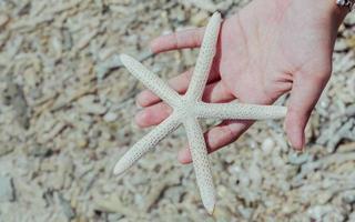 mano sosteniendo una estrella de mar