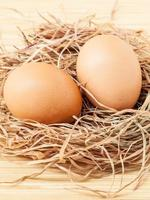 Eggs in a nest photo