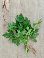 Branch of fresh parsley