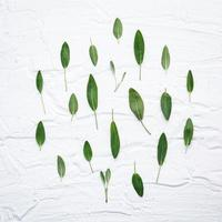 Group of sage leaves photo