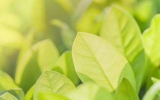 fondo de hoja verde brillante