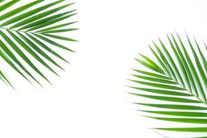 Palm leaves isolated on white background photo