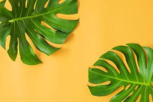 hojas de monstera sobre fondo naranja foto