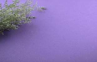 Purple flowers flat lay on purple background photo