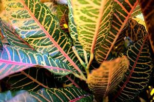Vivid colorful abstract natural leaves texture