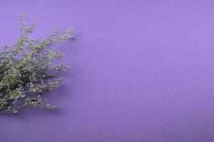 flores púrpuras planas sobre fondo azul púrpura foto