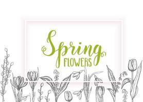 tarjeta de primavera con flores dibujadas a mano, lirios del valle, tulipán, sauce, campanilla blanca, azafrán - aislado en blanco. letras hechas a mano vector