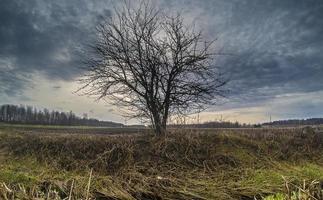 Single tree in a field against a cloudy blue sky
